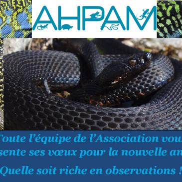 Vœux AHPAM
