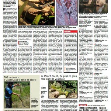 Interview  dans le Dauphiné Libéré