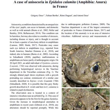 A case of anisocoria in Epidalea calamita (Amphibia: Anura) in France